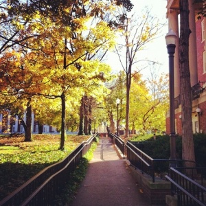 Vanderbilt_fall2